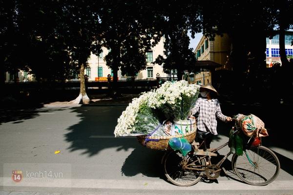 Chùm ảnh: Cúc họa mi bồng bềnh như mây về trên phố Hà Nội 5