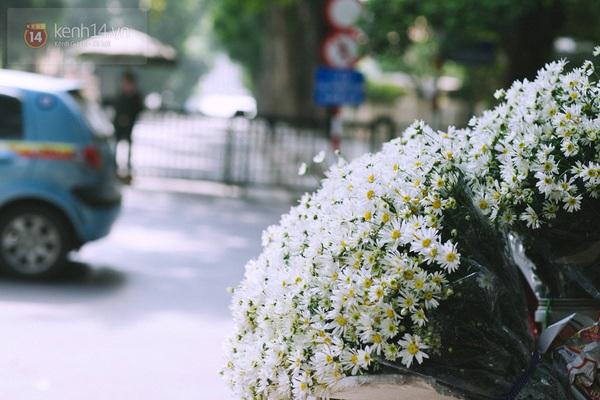 Chùm ảnh: Cúc họa mi bồng bềnh như mây về trên phố Hà Nội 6