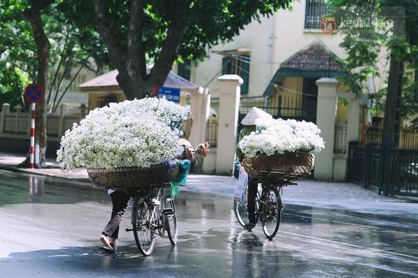 Chùm ảnh: Cúc họa mi bồng bềnh như mây về trên phố Hà Nội 7