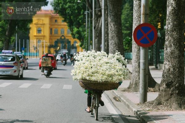 Chùm ảnh: Cúc họa mi bồng bềnh như mây về trên phố Hà Nội 9