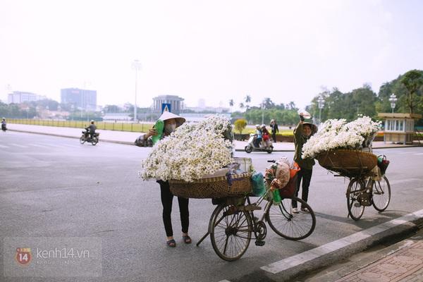 Chùm ảnh: Cúc họa mi bồng bềnh như mây về trên phố Hà Nội 11