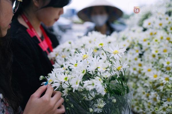 Chùm ảnh: Cúc họa mi bồng bềnh như mây về trên phố Hà Nội 13