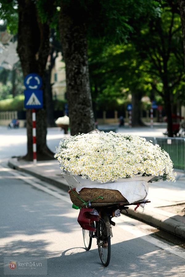 Chùm ảnh: Cúc họa mi bồng bềnh như mây về trên phố Hà Nội 15