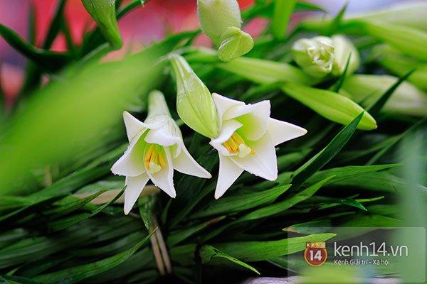 Tháng 4, hoa loa kèn trắng lại rong ruổi khắp phố Hà Nội 5