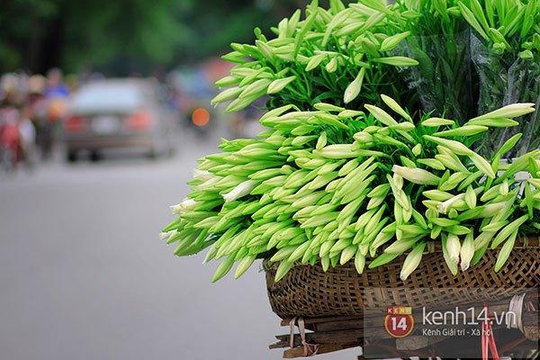 Tháng 4, hoa loa kèn trắng lại rong ruổi khắp phố Hà Nội 7
