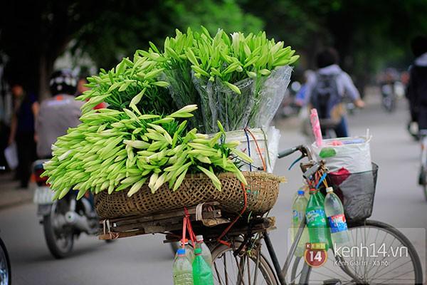 Tháng 4, hoa loa kèn trắng lại rong ruổi khắp phố Hà Nội 9
