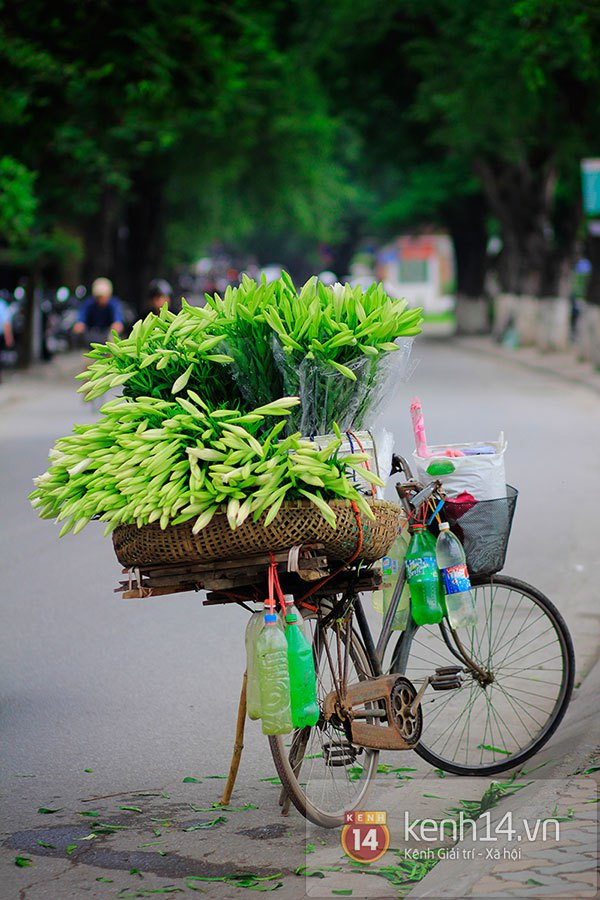 Tháng 4, hoa loa kèn trắng lại rong ruổi khắp phố Hà Nội 10