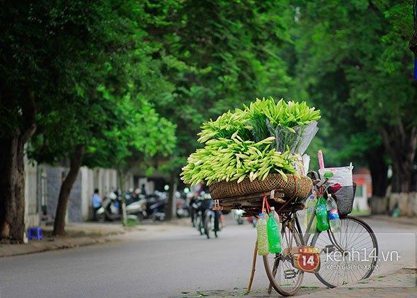 Tháng 4, hoa loa kèn trắng lại rong ruổi khắp phố Hà Nội 11