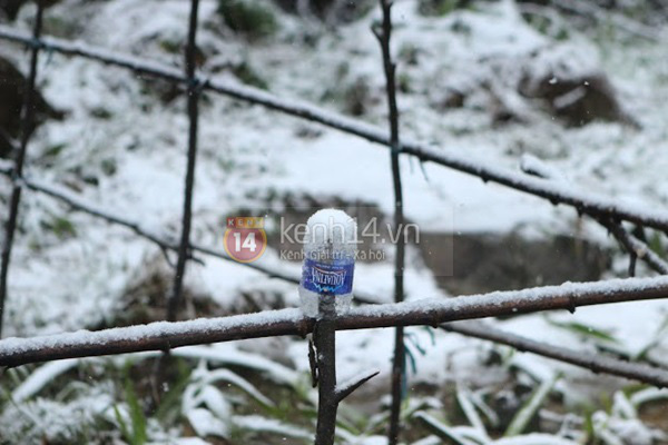 Chùm ảnh hot: Tuyết rơi dày, phủ trắng Sa Pa 14