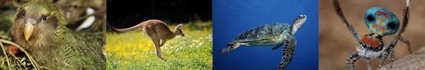 Điểm danh các loài động vật có quan hệ đồng tính 14