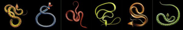 Huyền thoại quái vật rắn 8 đầu 8 đuôi ở Nhật Bản 12