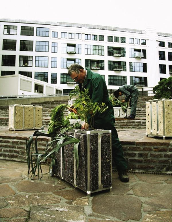"""Ý tưởng trồng cây """"biết đi"""" ở những nơi không ngờ 10"""