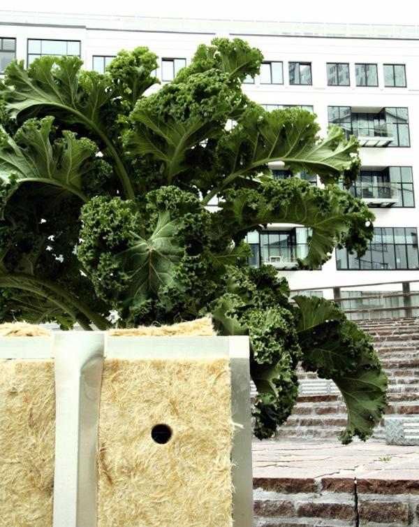 """Ý tưởng trồng cây """"biết đi"""" ở những nơi không ngờ 11"""