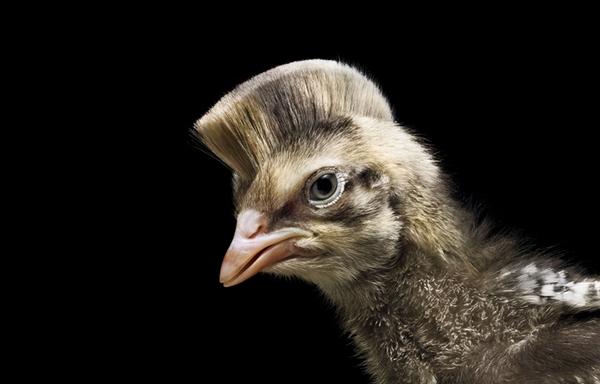 Sáng tạo hài hước biến động vật thành... trò cười 21
