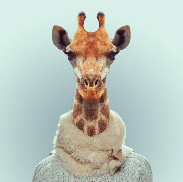 Sáng tạo hài hước biến động vật thành... trò cười 8