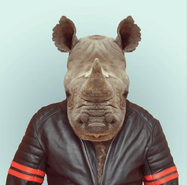 Sáng tạo hài hước biến động vật thành... trò cười 17