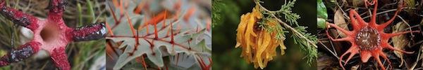 Vẻ đẹp chết người của những loài thực vật ăn thịt 15