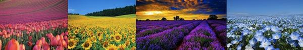 Ngắm các thiên đường hoa anh đào vòng quanh thế giới 21