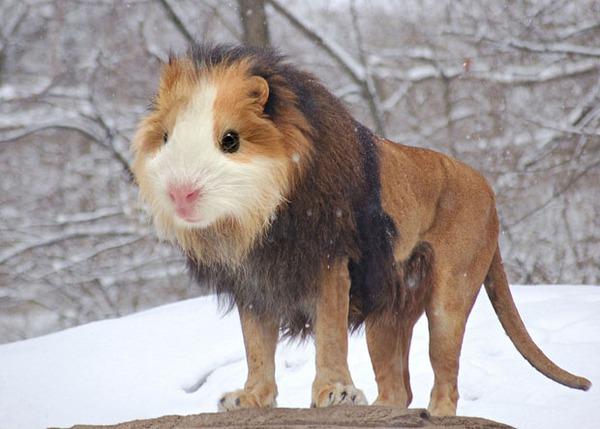 Ảnh động vật buồn cười qua góc nhìn nghệ thuật hài hước 2