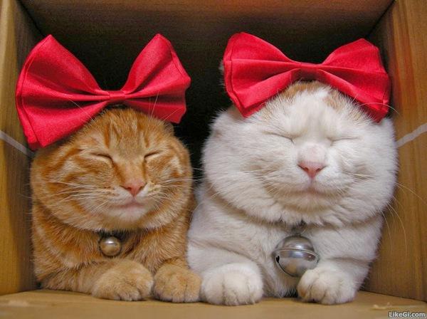 5 lý do khiến bạn muốn nuôi mèo ngay lập tức 7