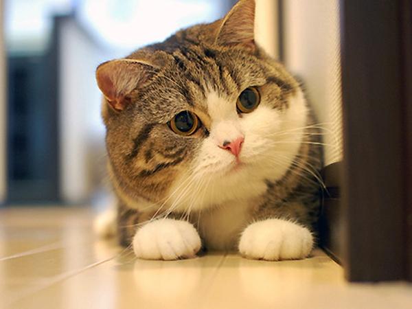 5 lý do khiến bạn muốn nuôi mèo ngay lập tức 1