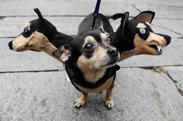 Thú cưng vừa đáng sợ vừa... đáng yêu trong trang phục Halloween 1