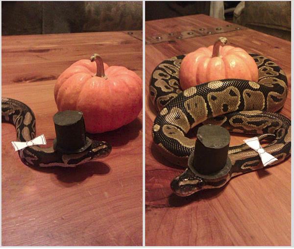 Thú cưng vừa đáng sợ vừa... đáng yêu trong trang phục Halloween 18