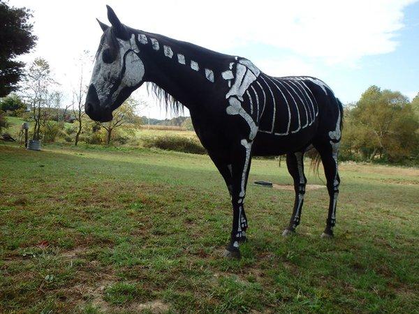 Thú cưng vừa đáng sợ vừa... đáng yêu trong trang phục Halloween 2