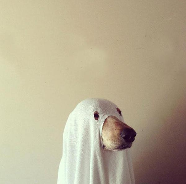 Thú cưng vừa đáng sợ vừa... đáng yêu trong trang phục Halloween 22