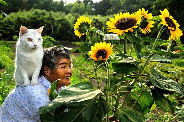 Chùm ảnh về cuộc sống thường ngày của một cụ bà người Nhật và chú mèo mắt hai màu 1