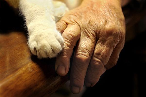 Chùm ảnh về cuộc sống thường ngày của một cụ bà người Nhật và chú mèo mắt hai màu 17