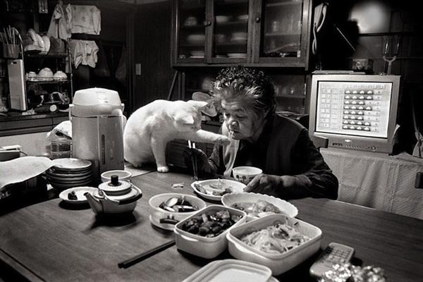 Chùm ảnh về cuộc sống thường ngày của một cụ bà người Nhật và chú mèo mắt hai màu 8