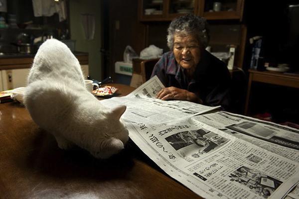 Chùm ảnh về cuộc sống thường ngày của một cụ bà người Nhật và chú mèo mắt hai màu 9