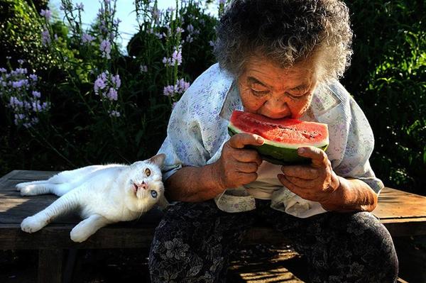 Chùm ảnh về cuộc sống thường ngày của một cụ bà người Nhật và chú mèo mắt hai màu 13