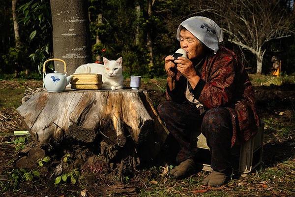 Chùm ảnh về cuộc sống thường ngày của một cụ bà người Nhật và chú mèo mắt hai màu 15