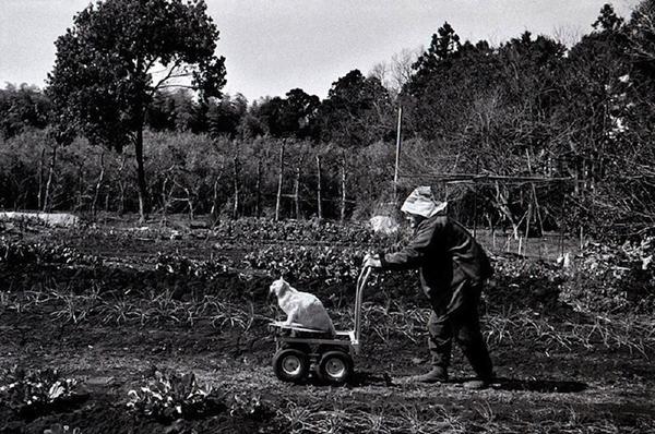 Chùm ảnh về cuộc sống thường ngày của một cụ bà người Nhật và chú mèo mắt hai màu 3