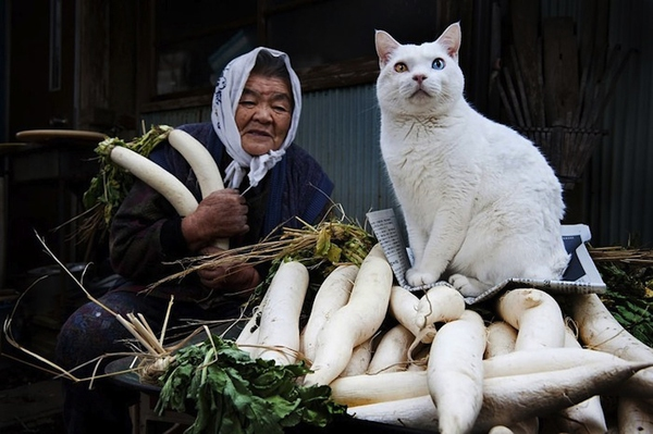 Chùm ảnh về cuộc sống thường ngày của một cụ bà người Nhật và chú mèo mắt hai màu 6