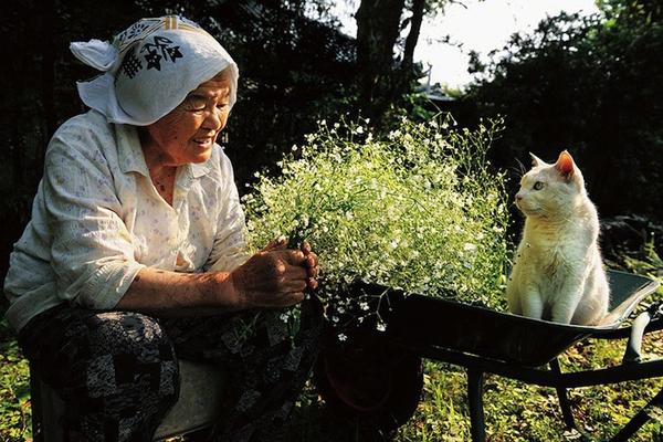 Chùm ảnh về cuộc sống thường ngày của một cụ bà người Nhật và chú mèo mắt hai màu 4