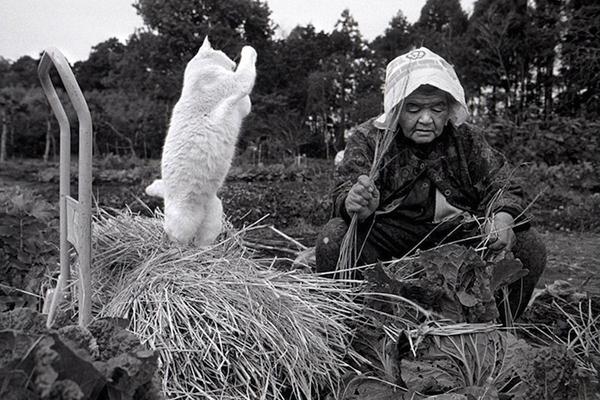 Chùm ảnh về cuộc sống thường ngày của một cụ bà người Nhật và chú mèo mắt hai màu 5