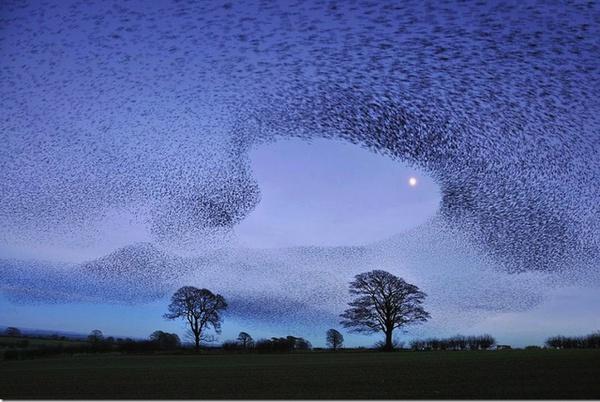 Những bức tranh nghệ thuật được tạo nên bởi chim trời 1