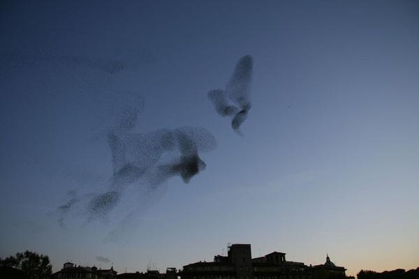 Những bức tranh nghệ thuật được tạo nên bởi chim trời 11