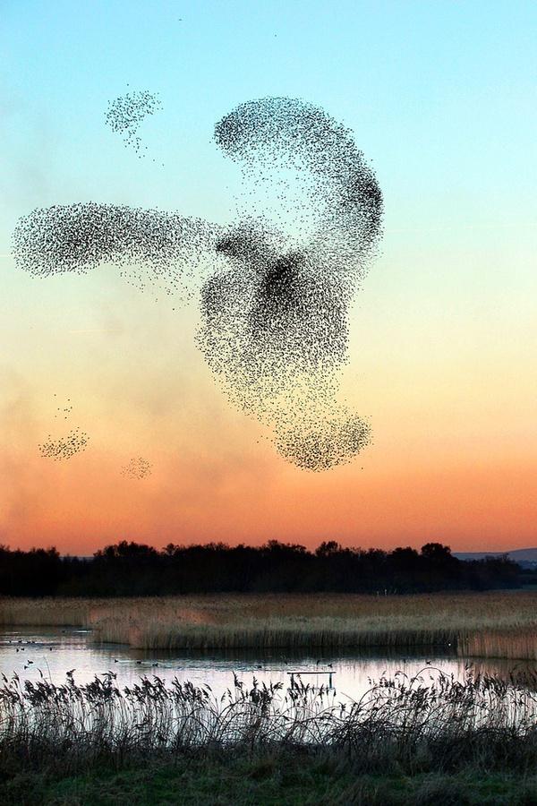 Những bức tranh nghệ thuật được tạo nên bởi chim trời 2