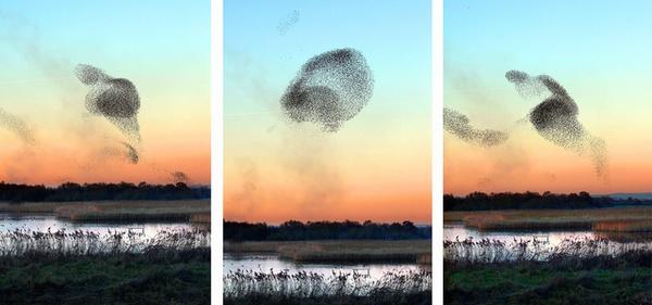 Những bức tranh nghệ thuật được tạo nên bởi chim trời 3