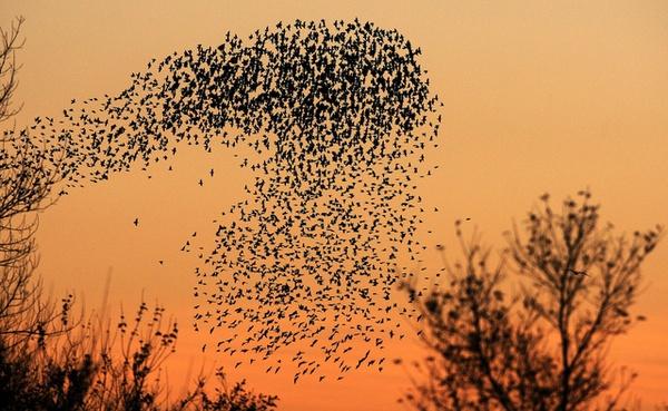 Những bức tranh nghệ thuật được tạo nên bởi chim trời 18