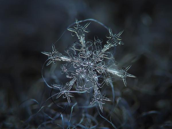 Cận cảnh những bông hoa tuyết độc nhất vô nhị 1