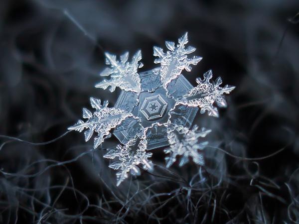 Cận cảnh những bông hoa tuyết độc nhất vô nhị 2