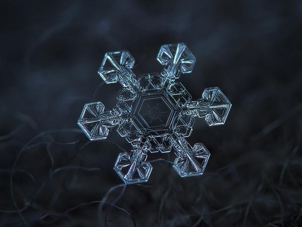 Cận cảnh những bông hoa tuyết độc nhất vô nhị 4