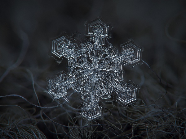 Cận cảnh những bông hoa tuyết độc nhất vô nhị 6