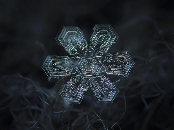 Cận cảnh những bông hoa tuyết độc nhất vô nhị 3