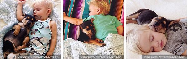 Chân dung những chú cún dễ thương nhất trong năm 2013 10